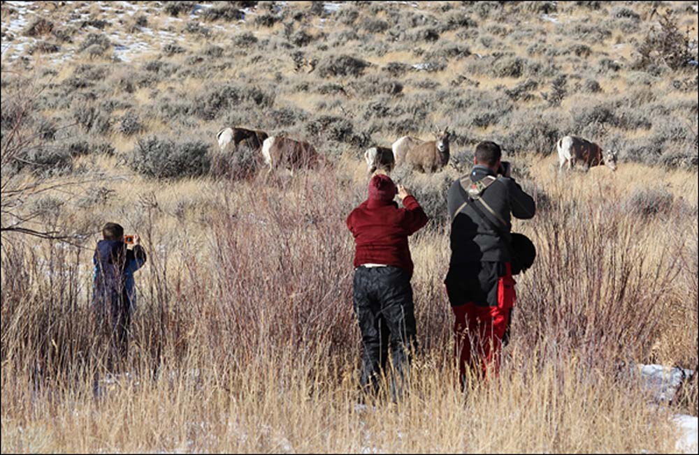 Wildlife Viewing Tours at the National Bighorn Sheep